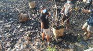 Pemuda Karang Taruna Pangaskarto Lumpur Gresik Kompak Bersihkan Sampah di Bantaran Laut