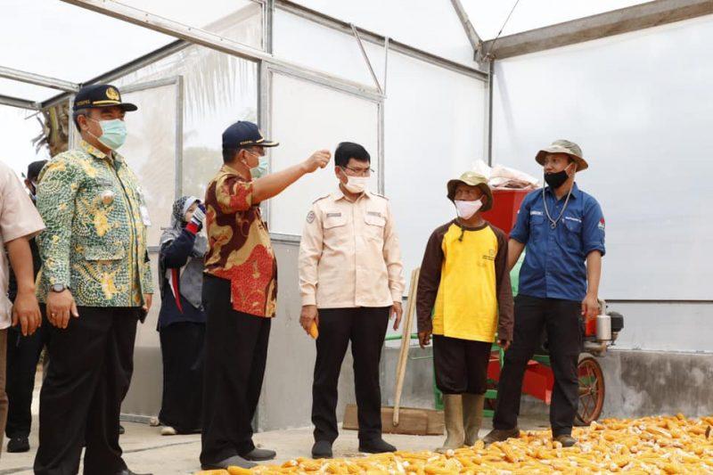 Jadi Pilot Project, Tuban Sukses Kembangkan Bibit Jagung Unggulan. Foto Progresnews.id/Ans