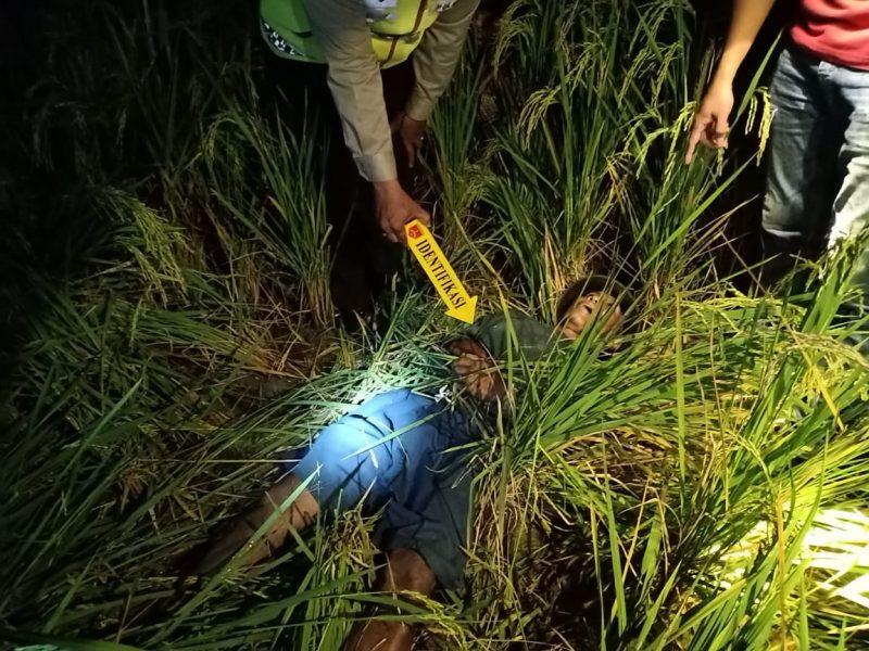 Jebakan Tikus Beraliran Listrik Kembali Memakan Korban, Petani Asal Gresik Tewas di Sawah Sendiri. Foto: Progresnews.id/Ayu