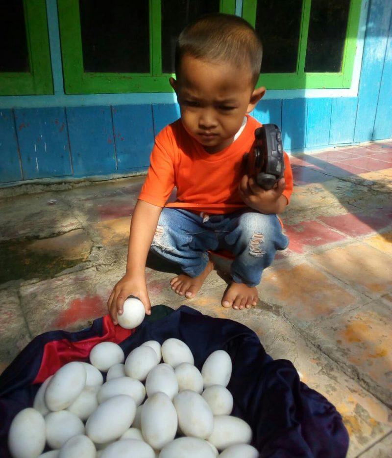 Penampakan puluhan butir telur yang diduga telur buaya. Foto: Ammy/Progresnews.id.